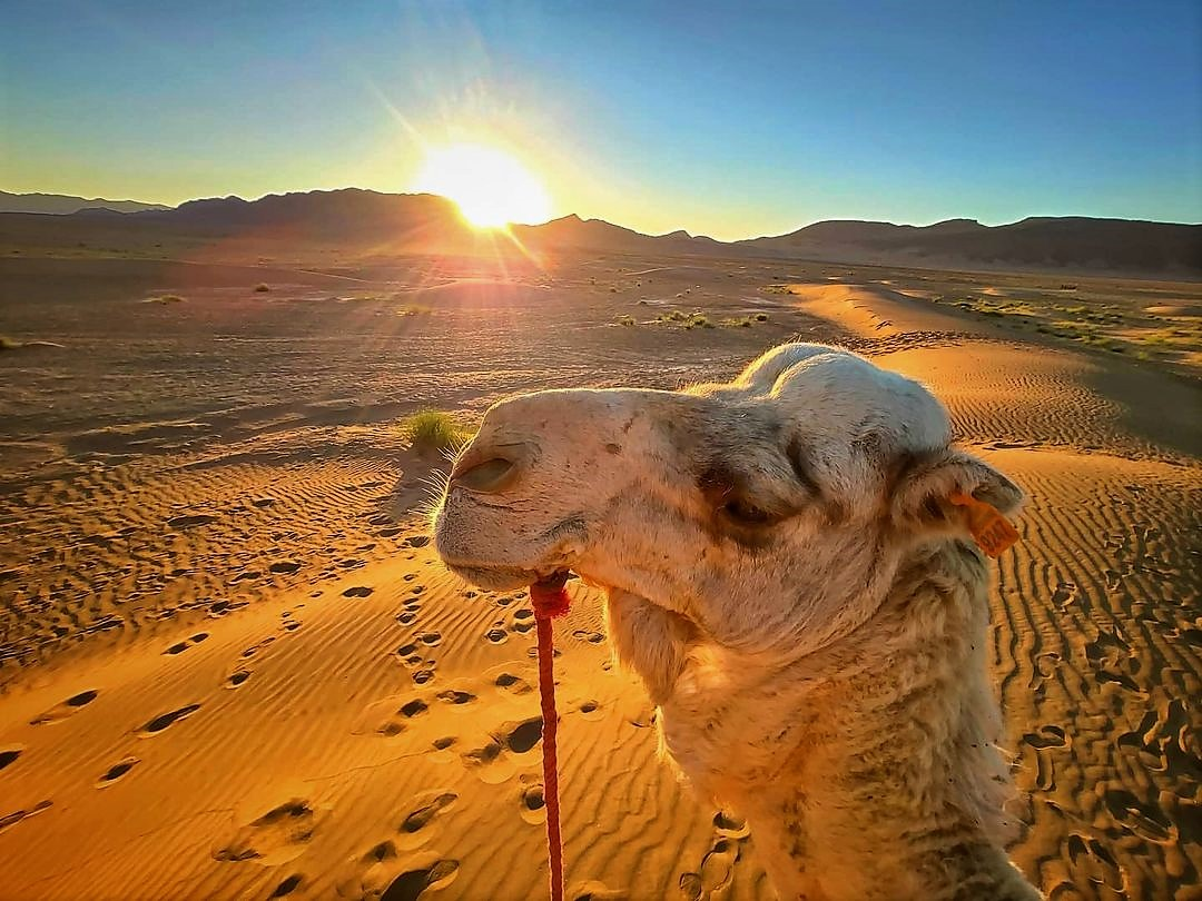 How To Ride A Camel in Sahara Desert